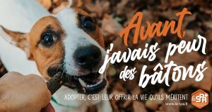 animaux-spa