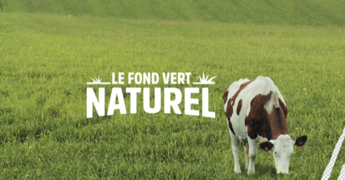 paturage-vert-vache-campagne-digital-charal