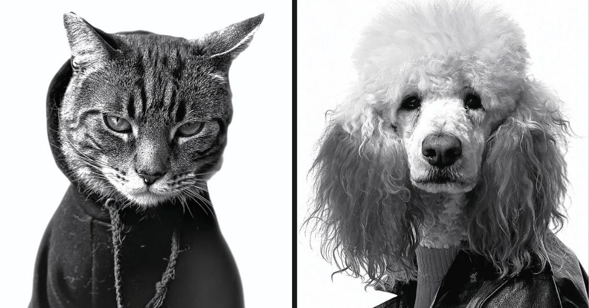 chat-chien-campagne-apple-portraits-animaux