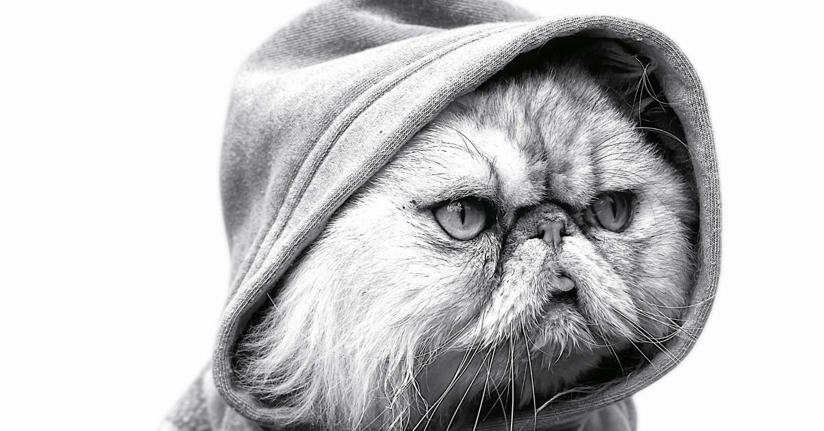 chat-campagne-apple-portraits-animaux